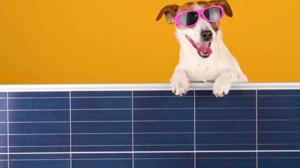 Vicces kutyafajta Jack Russell napszemüvegben napelemet tart narancssárga alapon. Alternatív energiaforrások.