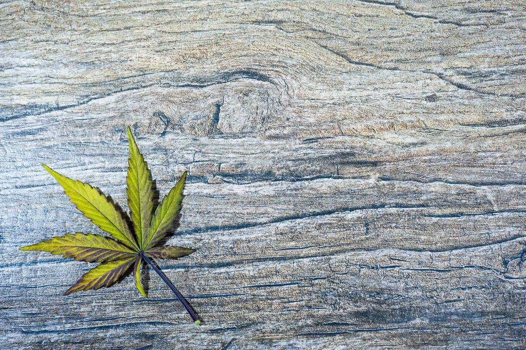 Single cannabis leaf