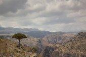 Dracaena cinnabari at daytime on mountain landscape