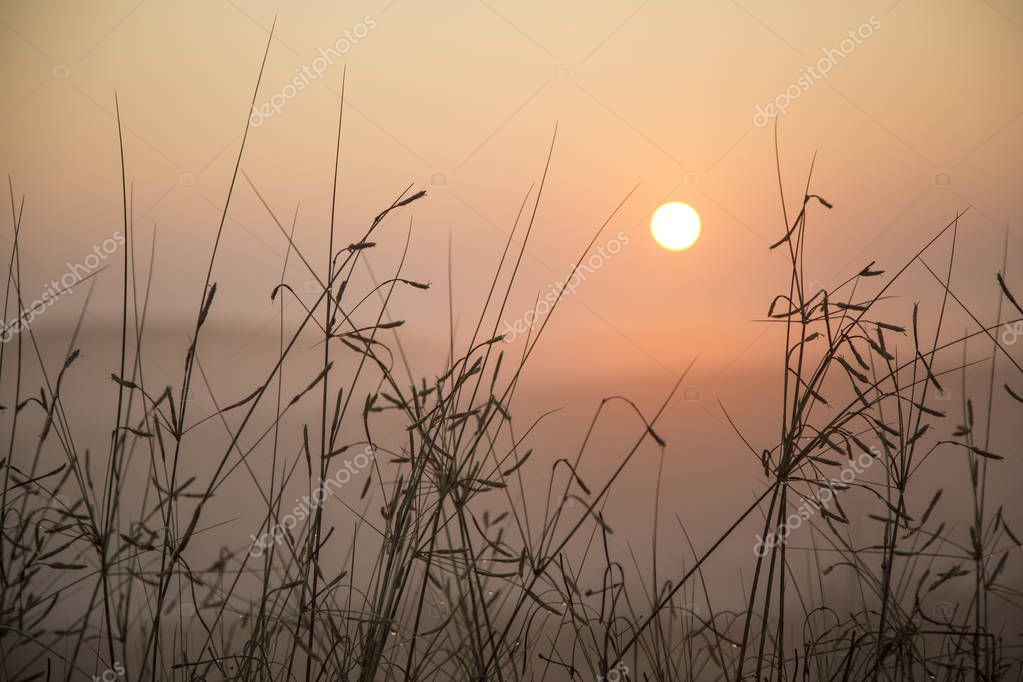 grass in desert with mist during sunrise