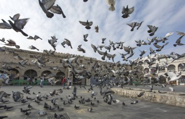 Pigeone flying in front of Souq Waqif
