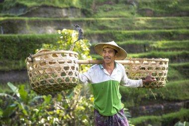 balinese rice field worker