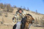 Mongolské muž na sobě sako kůži vlka, na koni v lese