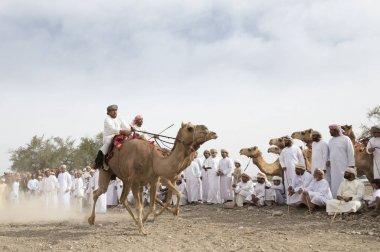 Ibri, Oman, April 7th, 2018: omani men racing on camels