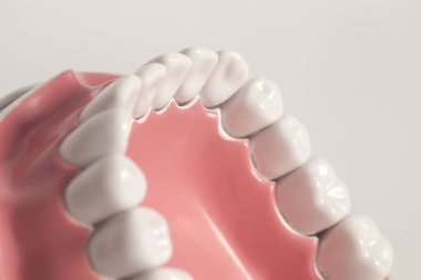 Tooth model on white background