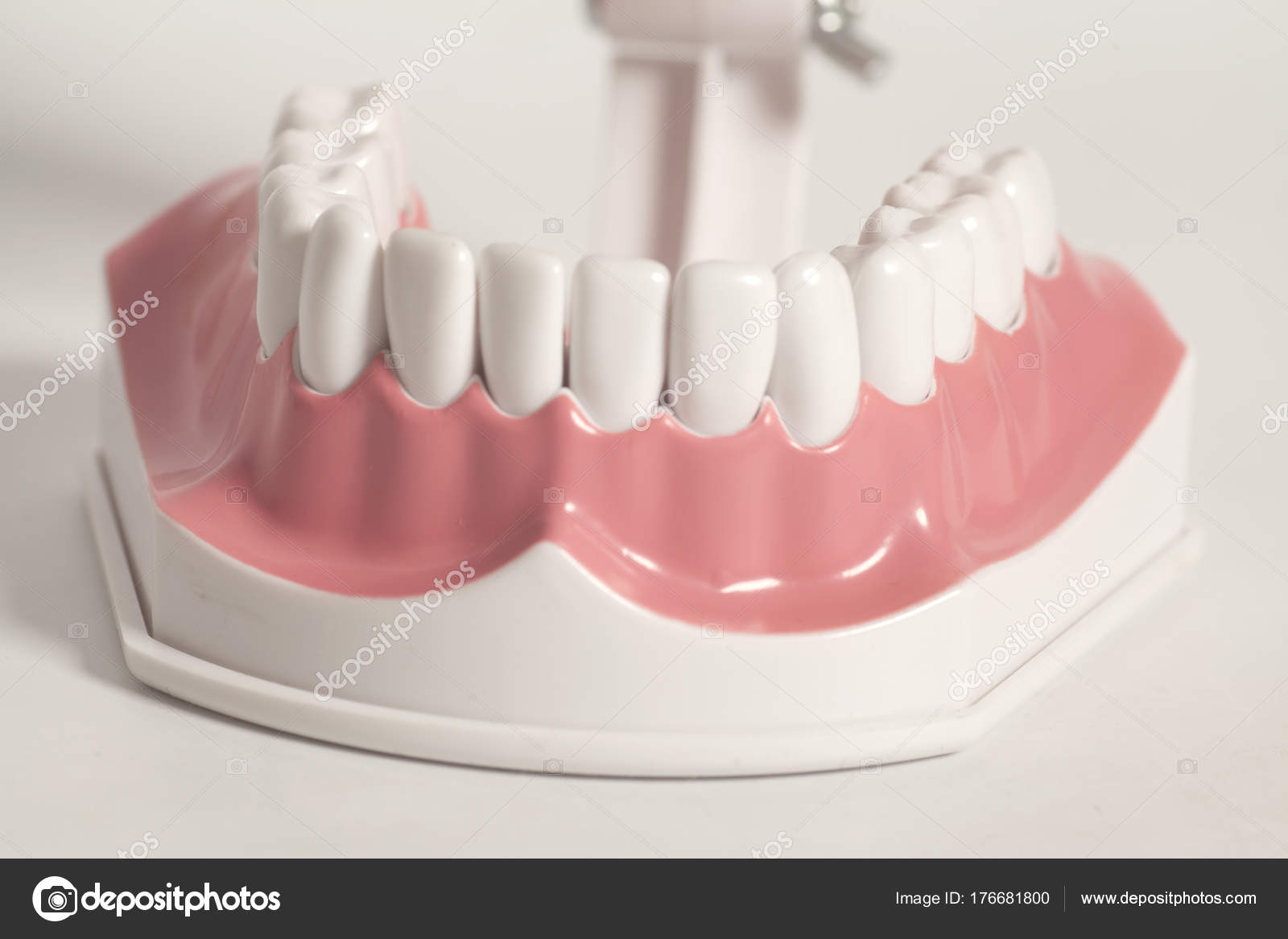 Modelo dental dientes humanos — Foto de stock © yurchello_108 #176681800