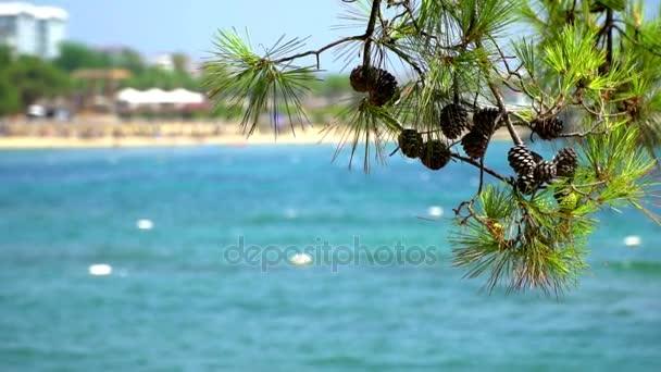 Větev borovice s kužely na pozadí modré moře.