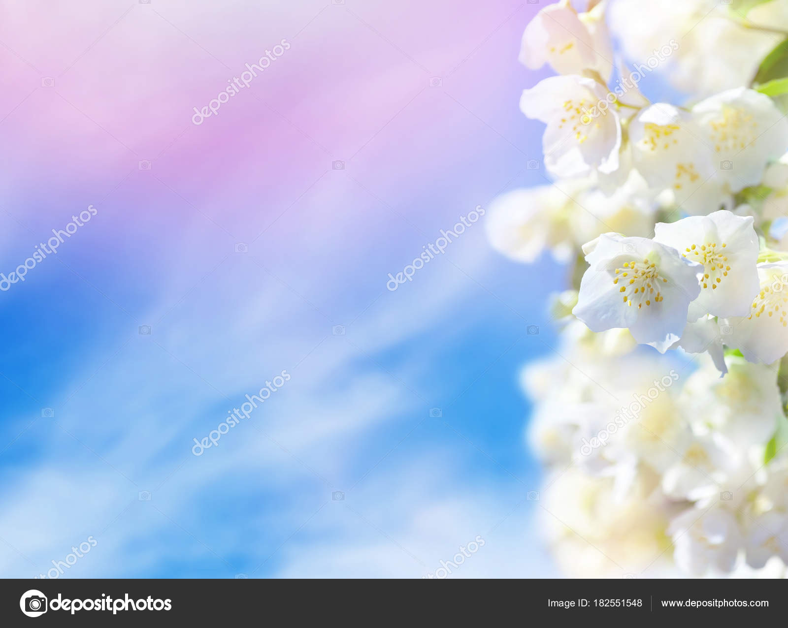 Natural background flowering jasmine flowers sky clouds stock natural background flowering jasmine flowers sky clouds stock photo izmirmasajfo