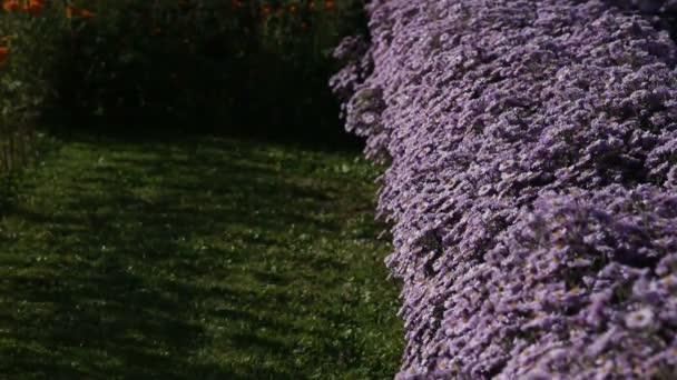 Včely do sběru nektaru, motýli růžové květy. pozadí