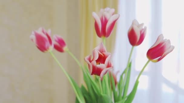Detailní záběr na kytici tulipánů ve váze na slunečním pozadí uvnitř