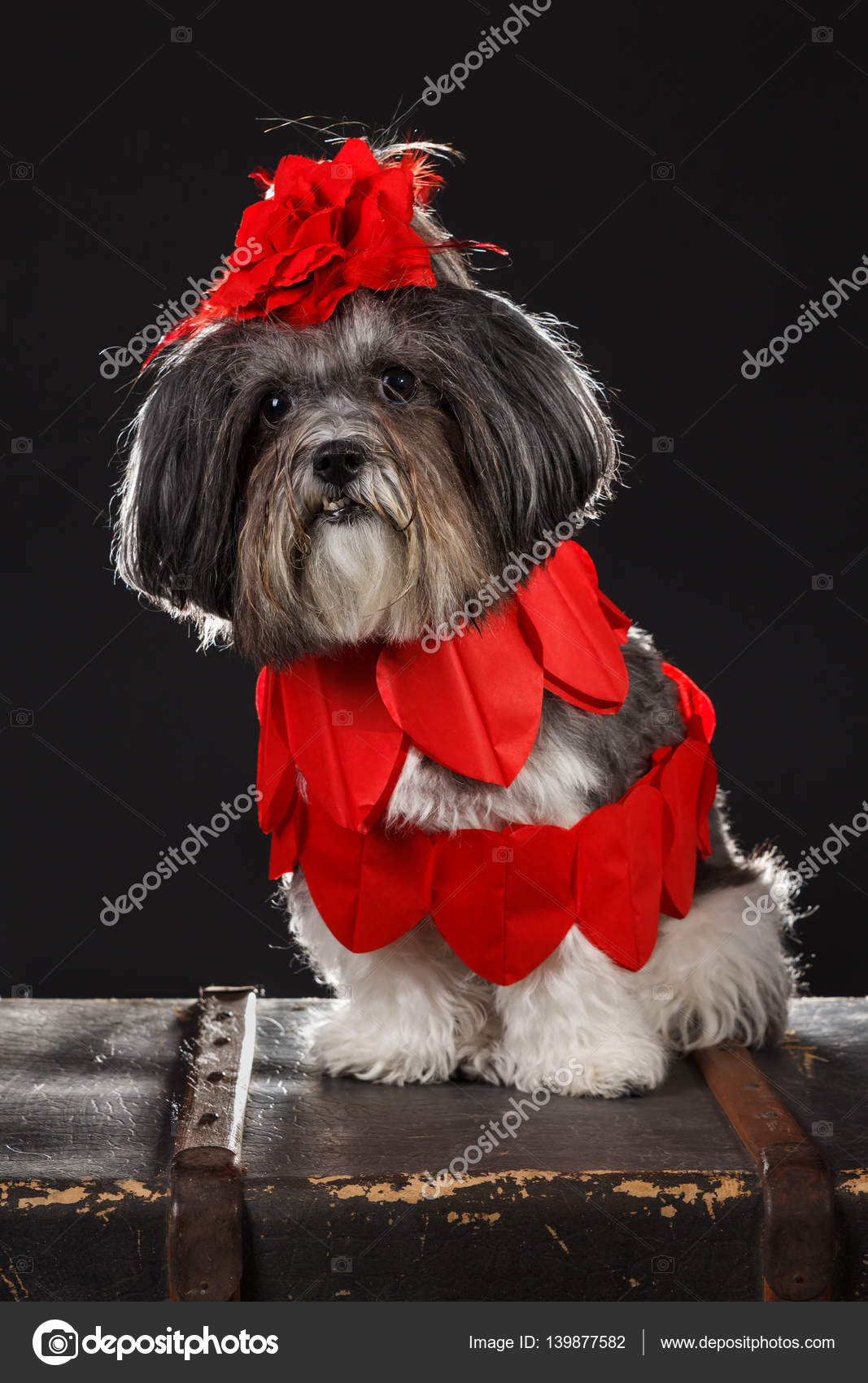 Wonderful Ribbon Bow Adorable Dog - depositphotos_139877582-stock-photo-adorable-dog-dressed-with-red  Trends_587385  .jpg