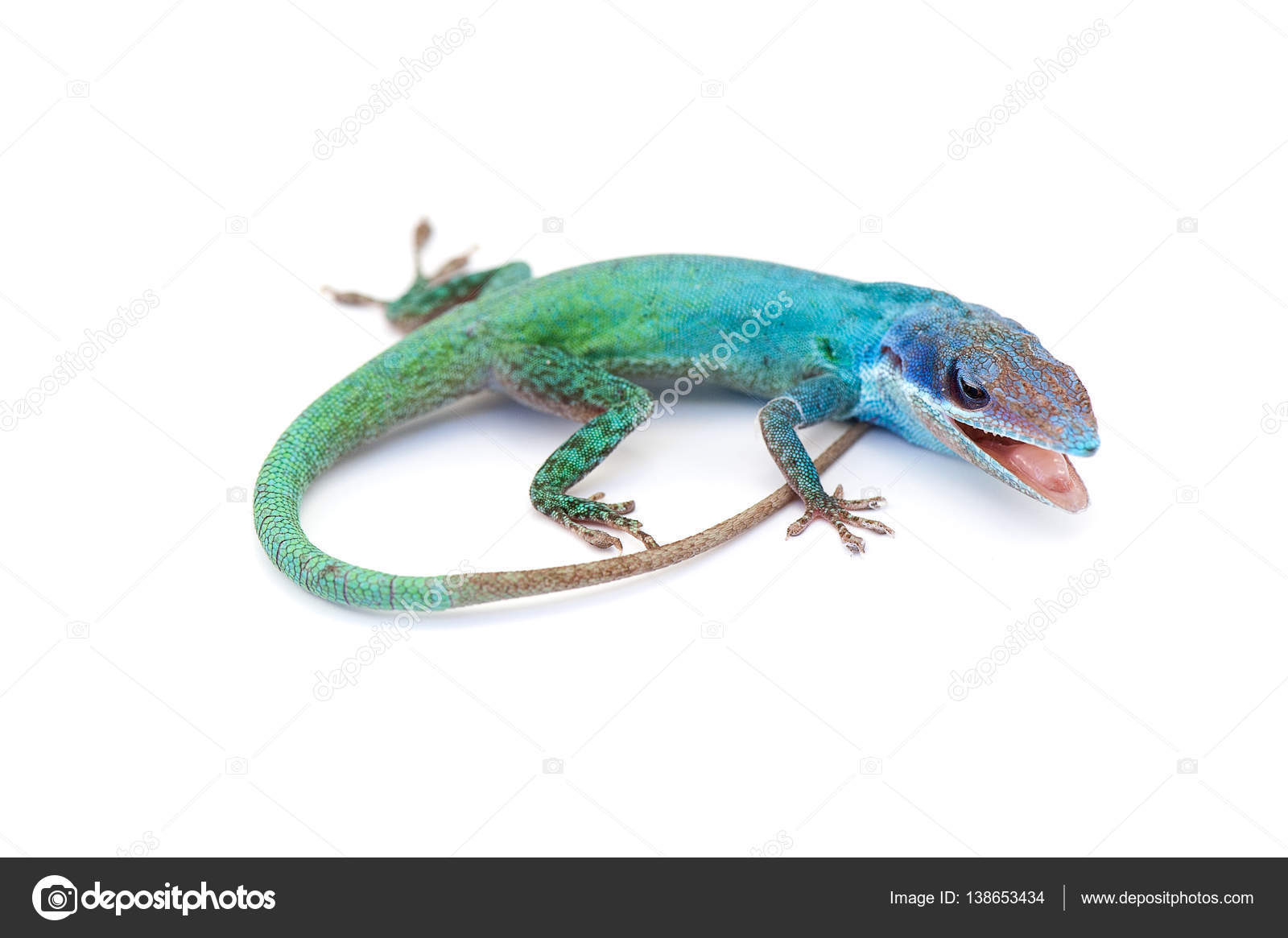 lizard gecko isolated on white background u2014 stock photo