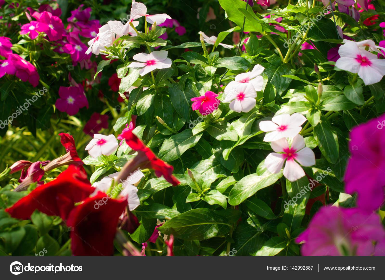 La variété de fleurs en pleine croissance. Fleurs de couleur ...