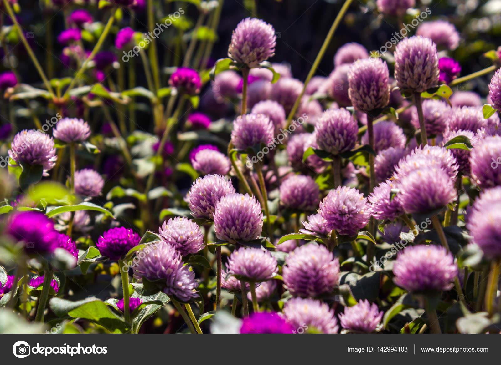 The little purple flowers a huge amount of purple blooms stock the little purple flowers a huge amount of purple blooms stock photo mightylinksfo