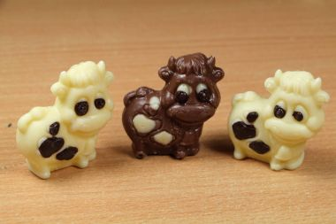 Chocolate cows for easter