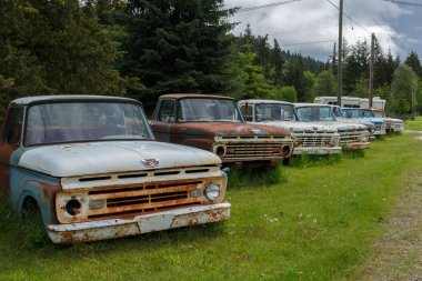 old cars in green forest