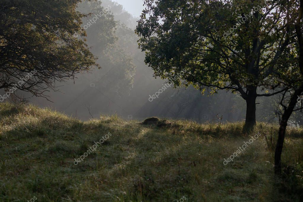 Sunrise over a forest in autumn