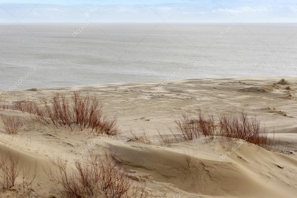 Sand dunes of the russian part Curonian Spit in february.