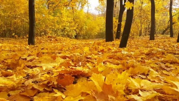 podzimní park opadá listí