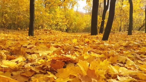 őszi park esik levelek