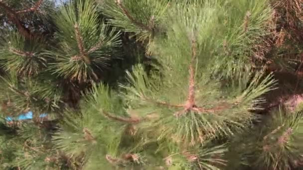 vánoční stromek větve letní rána