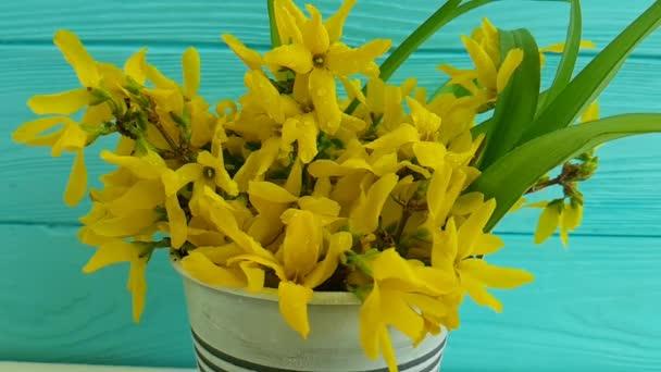 žlutá jarní květiny kapající vodu, pomalý pohyb