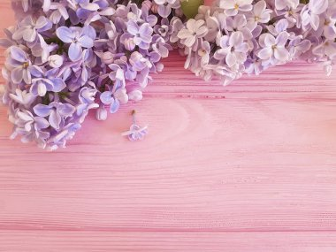 lilac beautiful fresh flower on a pink wooden background