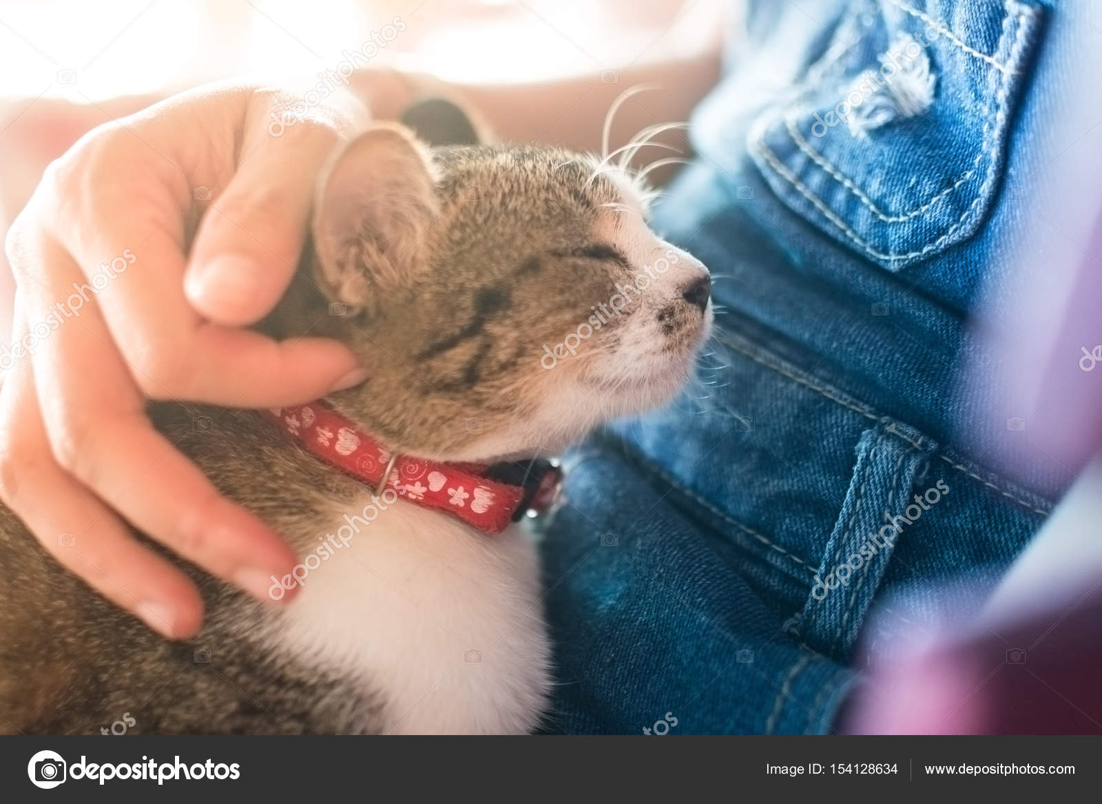 Chat mignon beanimal fond chat mignon meilleur ami sur hug fille femmes et  processus flou tonest ami fille femmes câlin et traiter ton flou \u2014 Image de