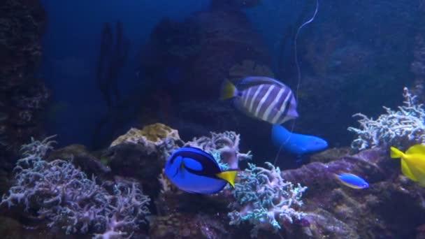 Moře a oceánu života. Nádherný podmořský svět. Ryby v akváriu.