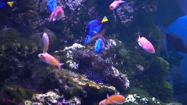 Dorys cartoon fish. Fish in the aquarium. Many beautiful colorful fish. Slow motion Background