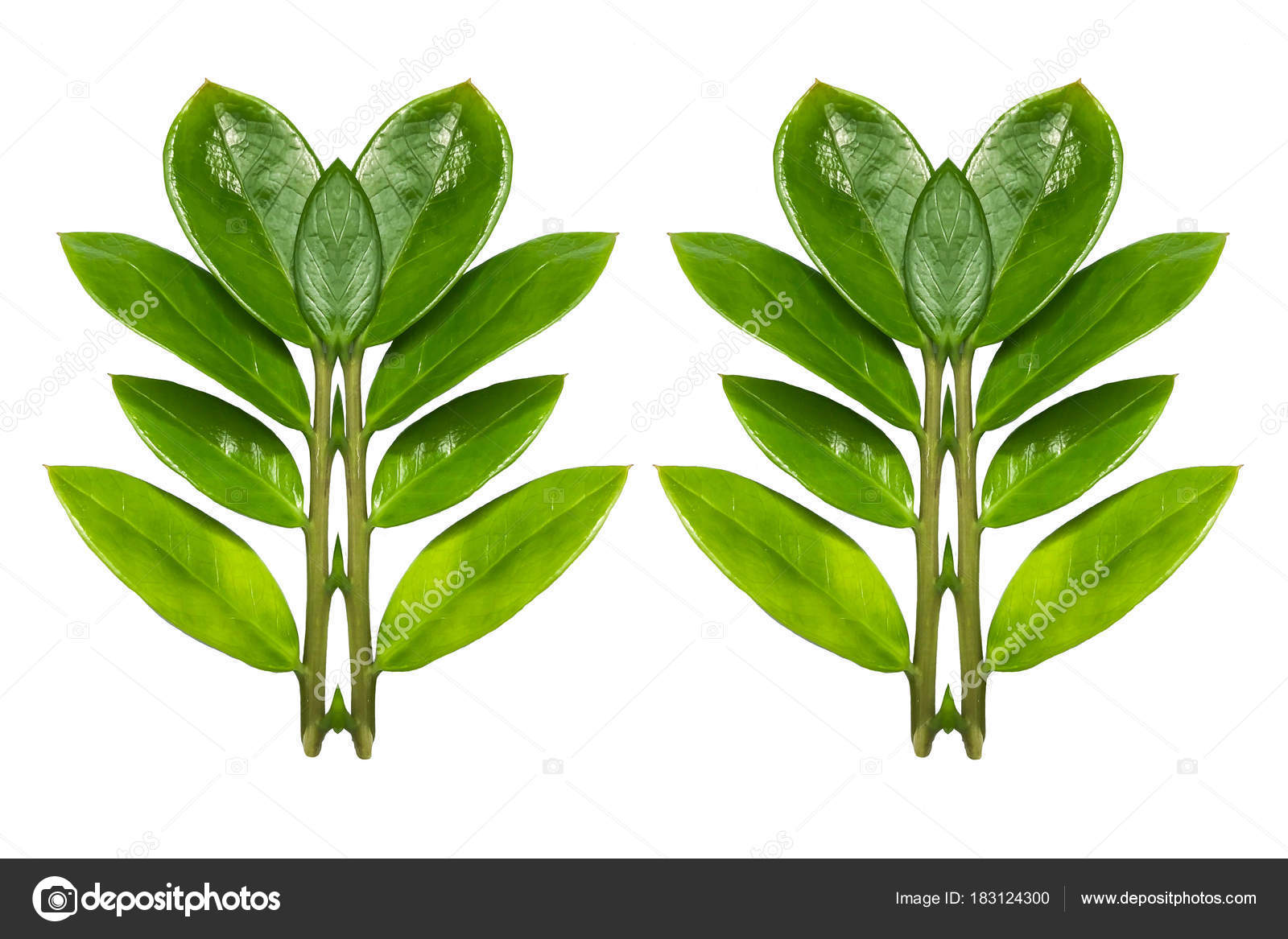 Leaf Heart Shaped Isolated On White Background Leaf Design Val