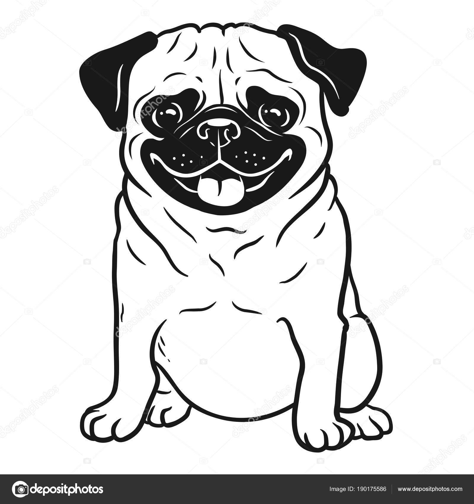 Ritratto del Pug cane bianco e nero disegnato a mano del ...