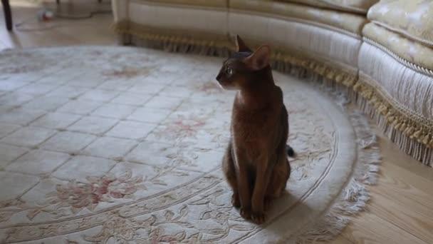 schöne Katze sitzend