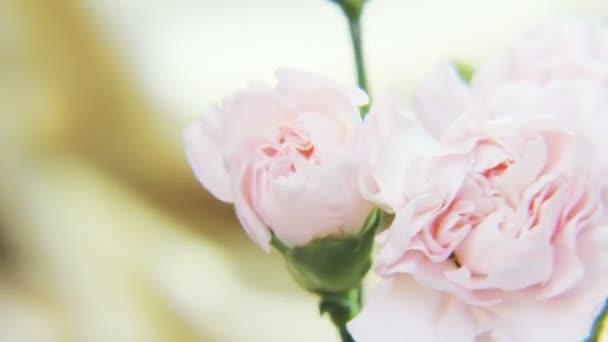 Bílé růže, otáčení na zlaté pozadí. Extrémní detail. Střílel na Red Epic