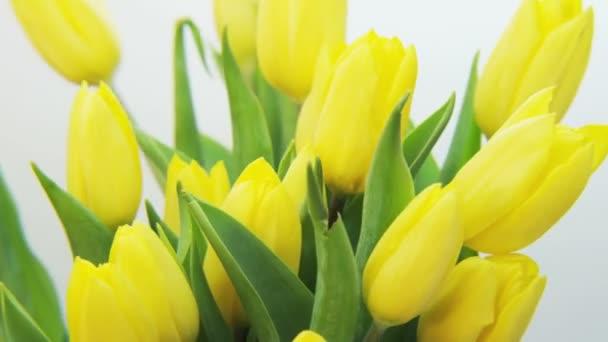 Žluté tulipány otočení na bílém pozadí. Extrémní detail. Střílel na Red Epic