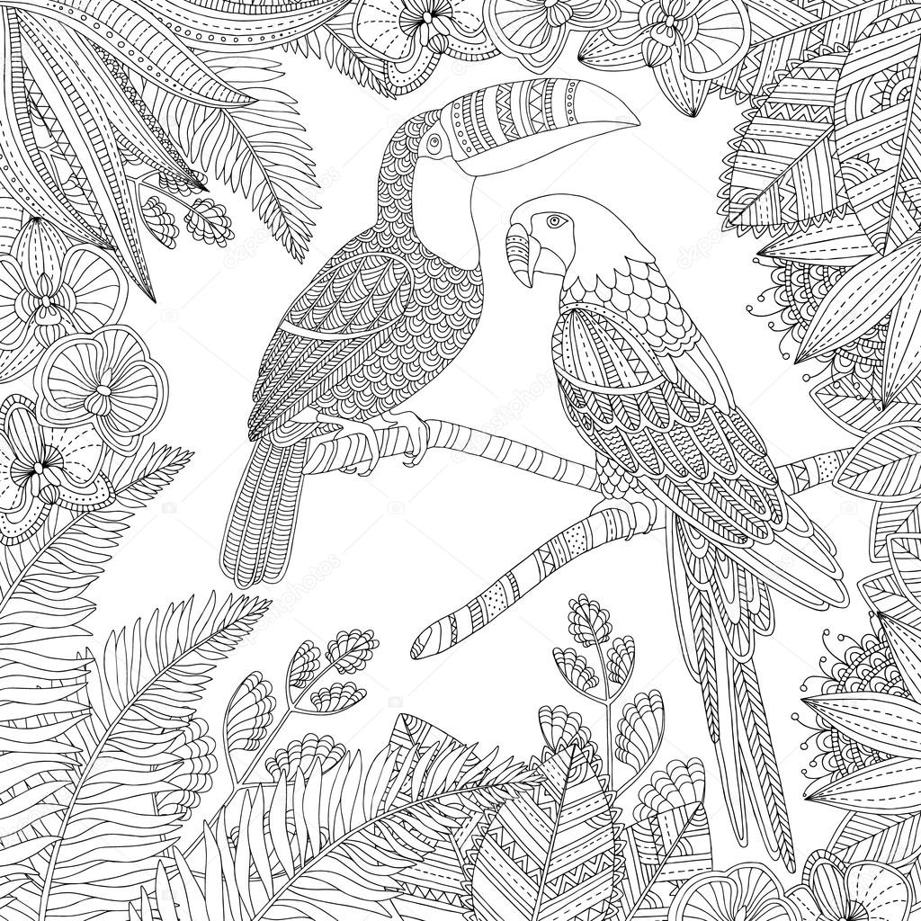 Vector Hand Drawn Toucan Bird And Ara Parrot Tropical Illustration For Adult Coloring Book Freehand