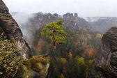 Herbstfarben im Elbsandsteingebirge