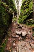Staré schody v lese poblíž Kamnitzleiten