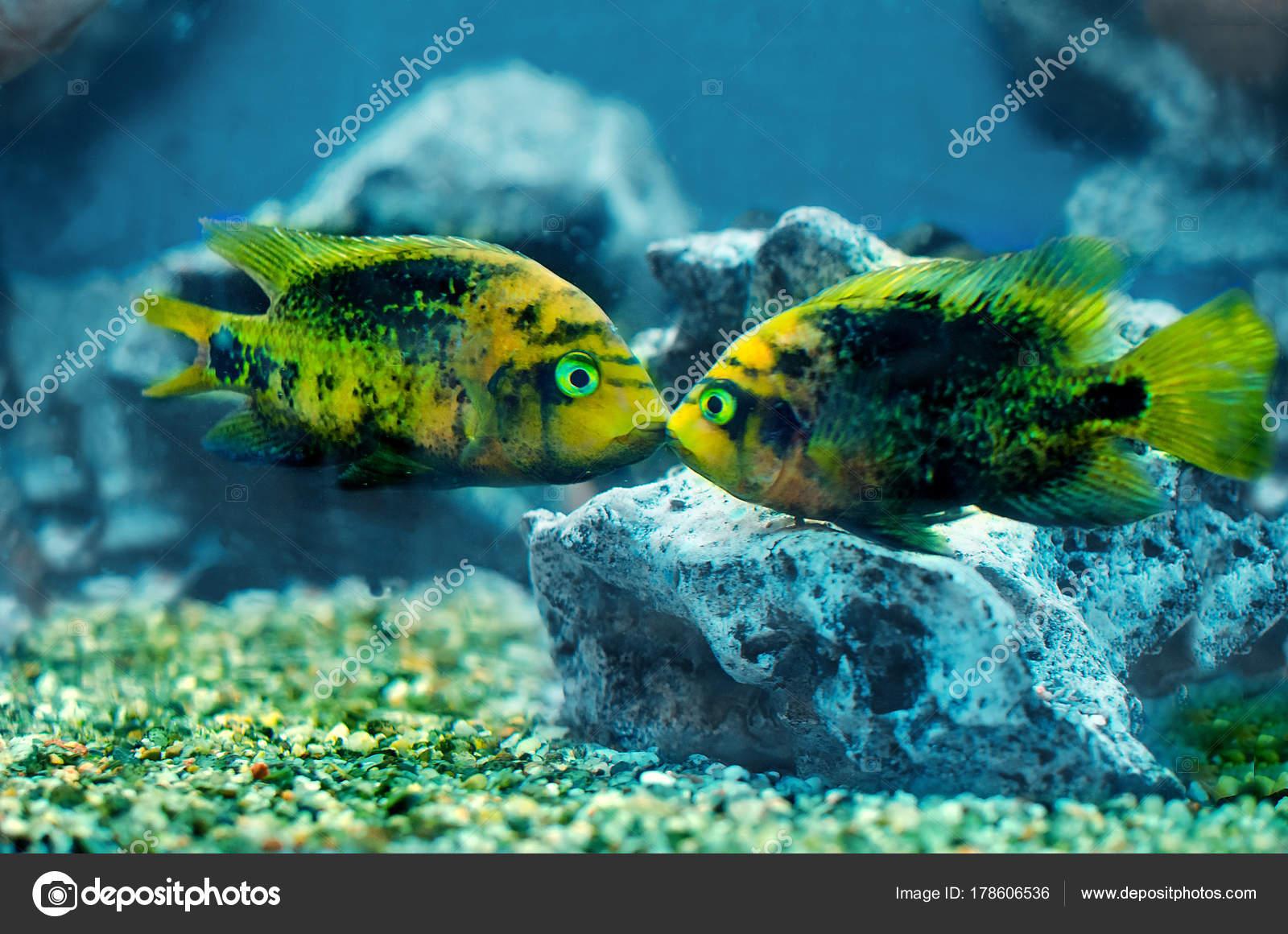 Two Colorful Exotic Fish Swiming Aquarium — Stock Photo © KajaNi ...