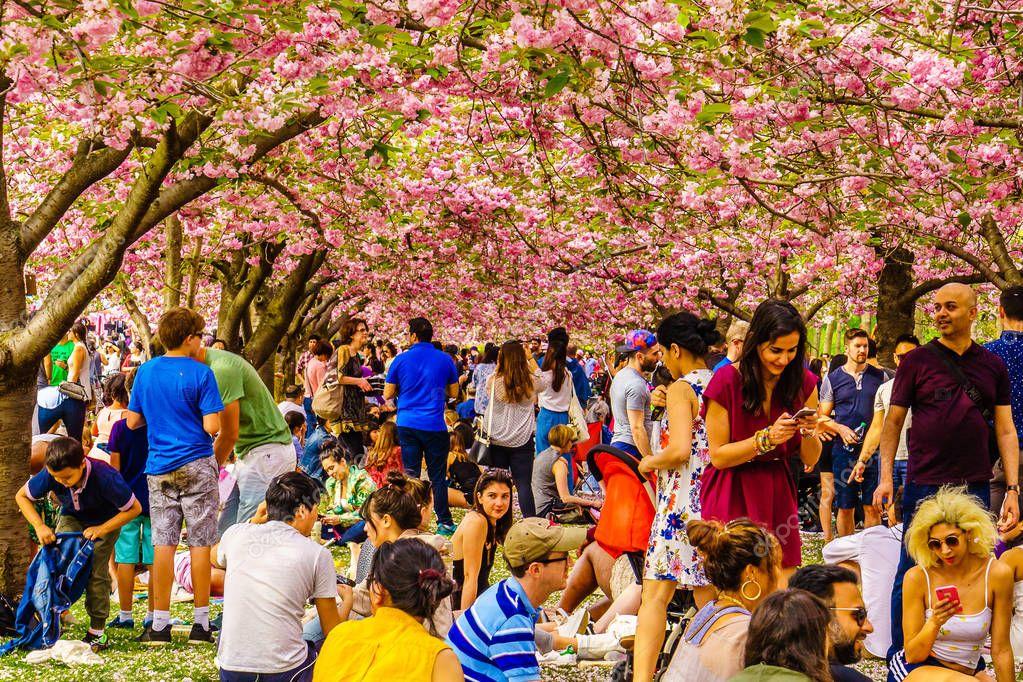 Brooklyn NY US - April 29 2017 Sakura Matsuri Spring day of cherry blossom