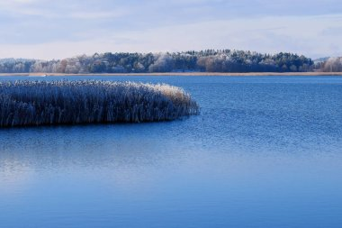 Calm sea and frosty reeds