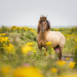 stock-photo-beautiful-wild-horse-on-nature