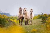 krásné divoké koně v přírodě