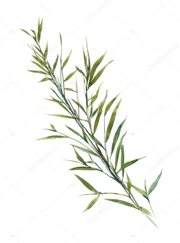 Pintura acuarela ilustración de hojas de bambú — Foto de stock ...