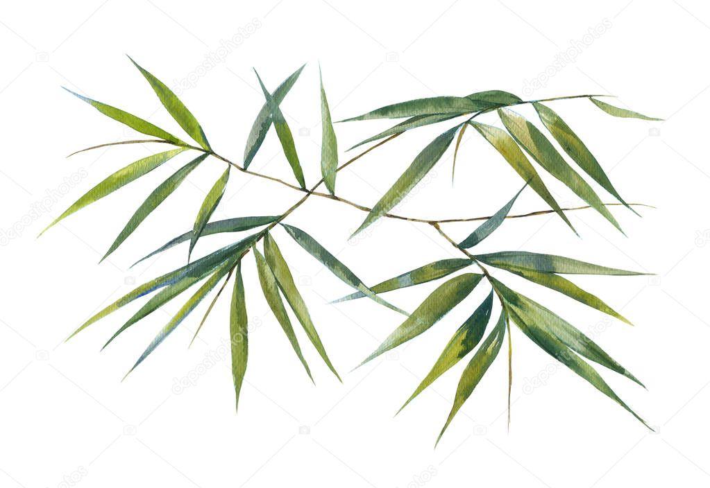 Aquarell Bild Malen Des Bambus Blatter Stockfoto C Photoiget0921