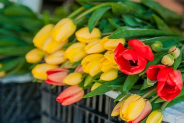 Bouquets of tulips for sale