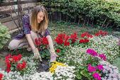 Fotografie Glückliche junge Frau spudding Boden mit Ripper Tool. Weibliche Gärtner kümmert sich um bunte Blumen