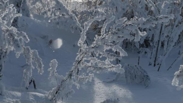 Primo piano: Piante innevati in inverno, la neve cade
