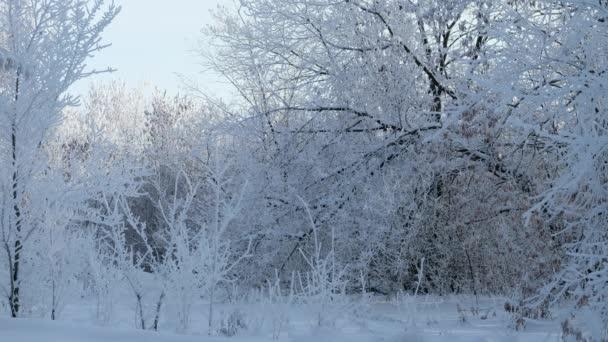 schöner verschneiter Wald, 4k