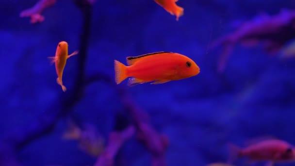 Piscina Brillante Arancione Dei Pesci Nellacquario Di Oceanarium Su